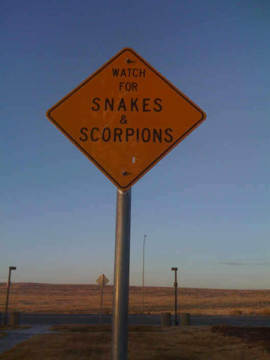 snakes and scorpions