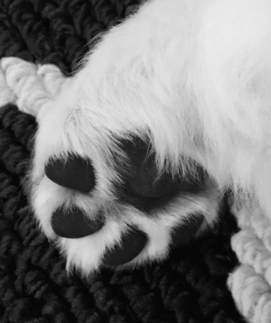 heart-shaped-paw